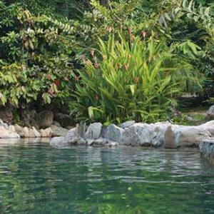 Aguas Termales Naturales - Rivera Huila
